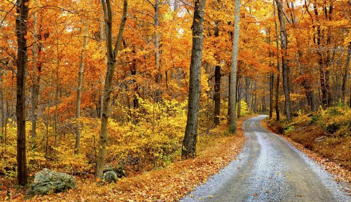 Winding Mountain Road in Autumn