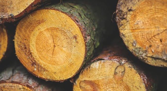 tax basis on timber and easements